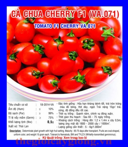 ca chua cherry f1 p va071
