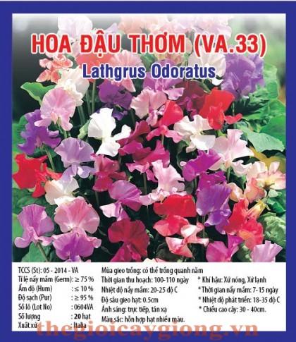 hoa dau thom va33