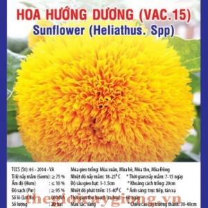 hoa huong duong va15