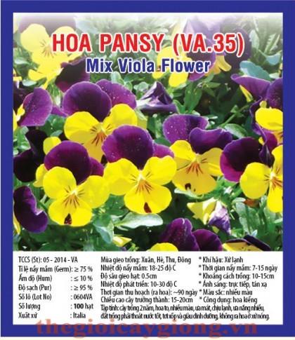 hoa pansy va35